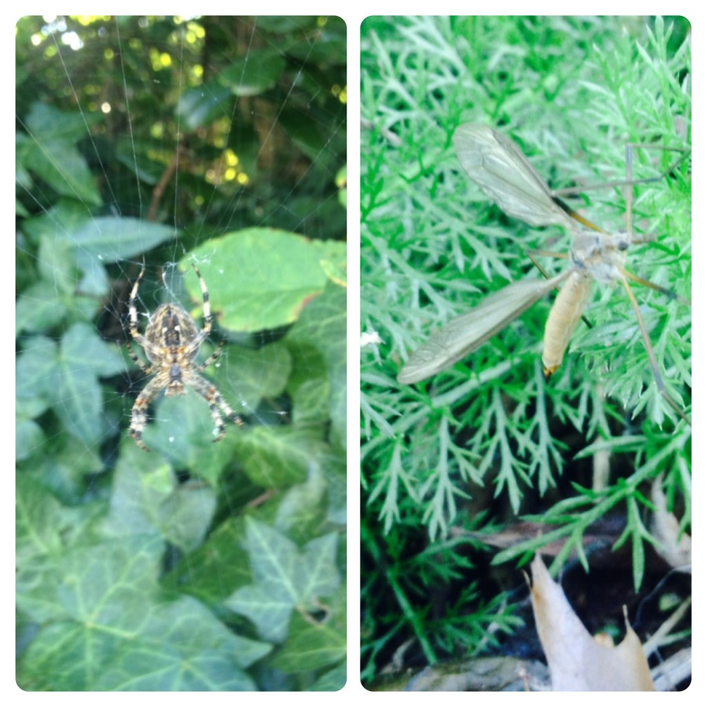 Spider and Bug from our Little Adventure