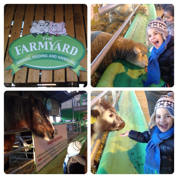 Animal Feeding at The Farmyard