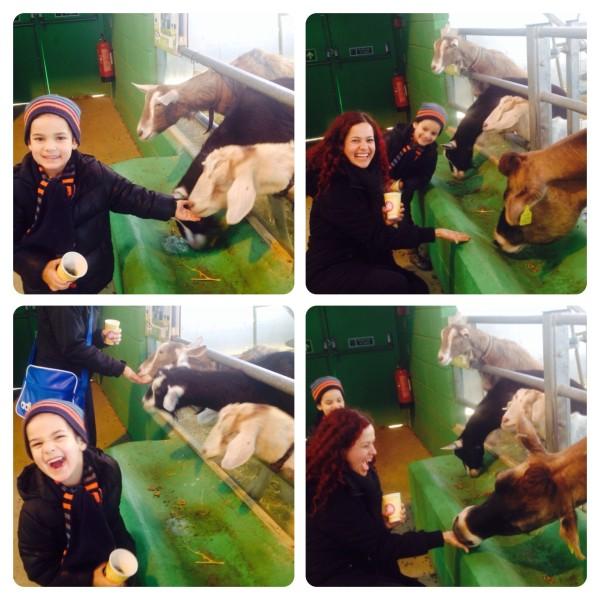 Feeding Animals at Willows Farm Village