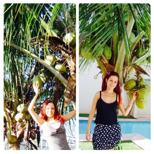 Favourite Flavour Inspired byCoconut Trees in Brazil