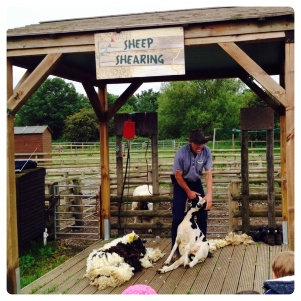 Spring Special at Willows Activity Farm