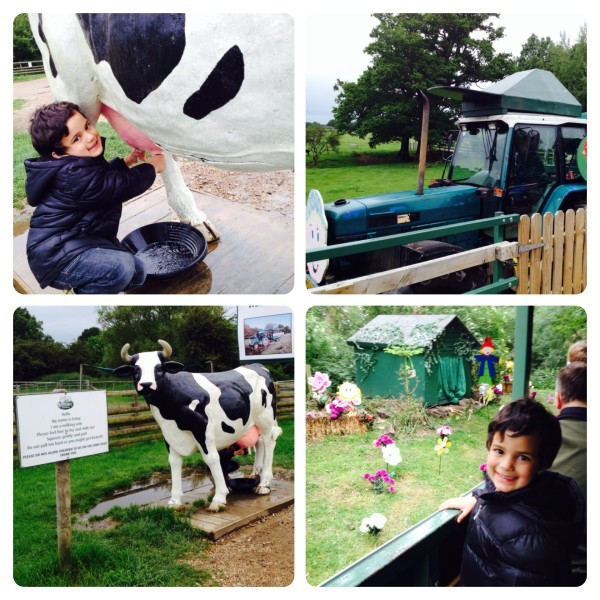 'Milking' Cow and Tristan the Runaway Tractor