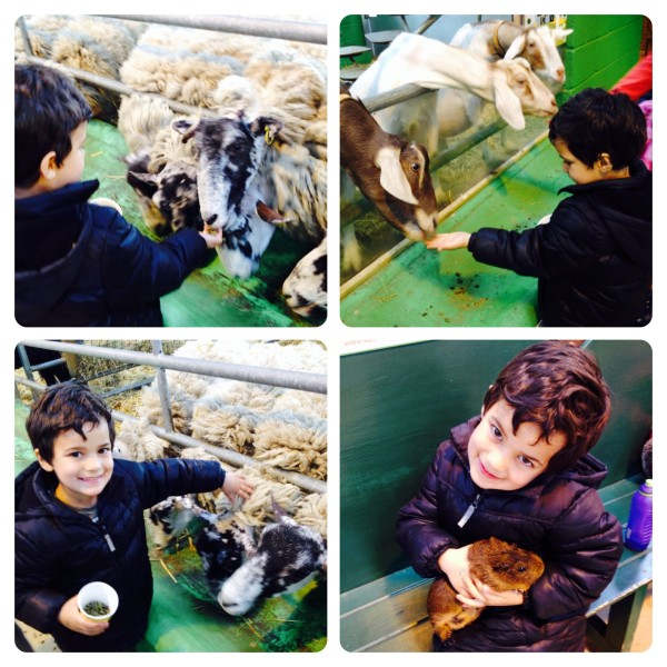 Feeding Animals at Farmyard
